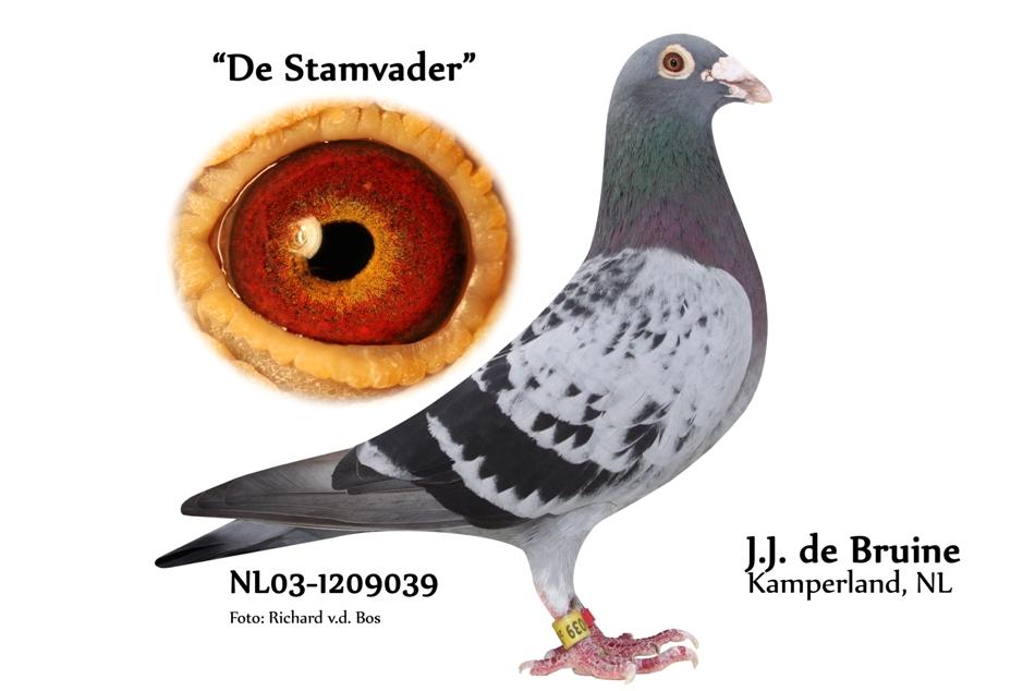 Racing pigeons breeding methods - photo#13